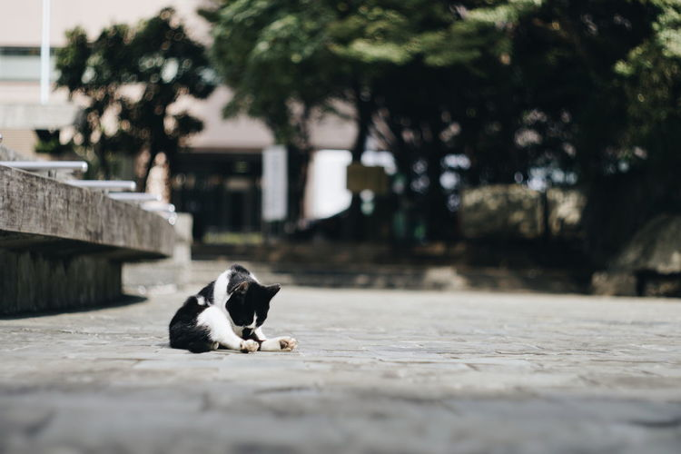 Cats clean themselves. One Animal Animal Themes Mammal Animal Domestic Domestic Animals Pets Vertebrate Feline Domestic Cat Cat Day Relaxation No People Selective Focus Sitting Dog Tree Canine Architecture Surface Level Whisker