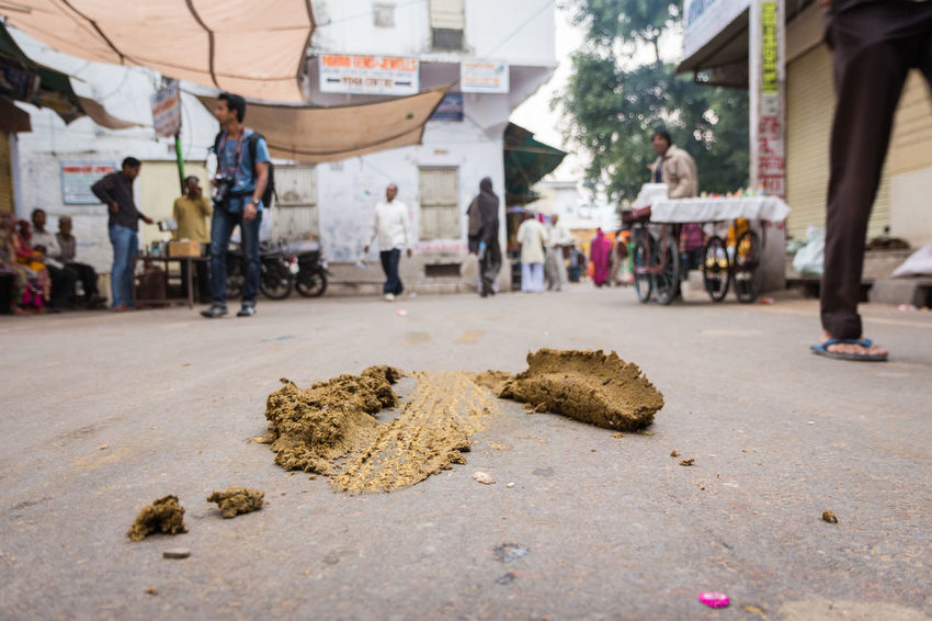 Pile of cow feces on street Disgusting  City Life City Street Day Dirty Excrement Feces India Indianstories Indiapictures Lifestyles Outdoors Pushkar Storytelling Street Streetphotography Streetphotographyindia Tourist Travel Vacation