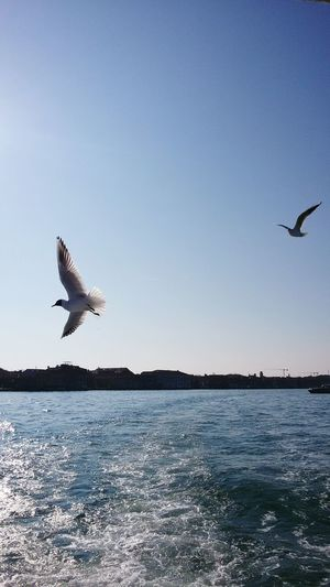 Gabbiani Fly Free Fly Bird Fly Libertá Liberty In The Sky Getting Inspired