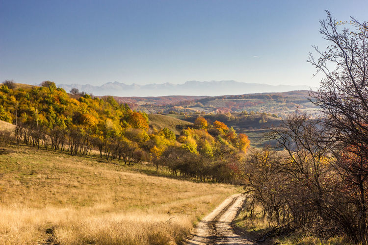 Road from Mighindoala - a deserted village in Transylvania with only two inhabitants left. A beautiful panorama of the Fagaras Mountains in the horizon. Fields of gold grass. First Eyeem Photo 43 Golden Moments Fields Of Gold Landscape Autumn Autumn Colors Horizon Over Land Season  Nature Road Dirt Road