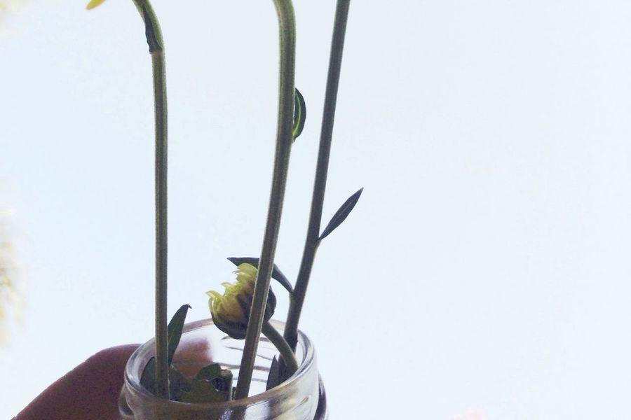 Flowers SmallFlowers Yellow Flower Nature Vscocam VSCO สลั่ว