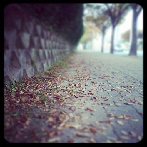 Autumn Fallen Leaves
