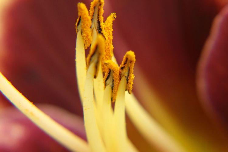Meeldraden Daglelie Hemerocállis Flower Friesland Hurdegaryp Taking Photos Check This Out Hello World