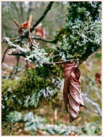 Focus On Foreground Close-up Outdoors Hanging Fragility Leaf Beauty In Nature Beauty In Nature Kate's Wood Kirriemuir Countryside Textures Forrest Walk Tree
