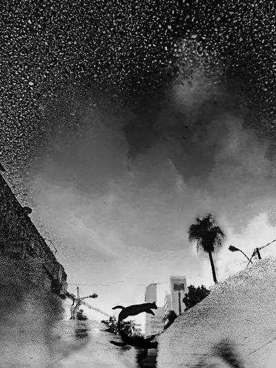 Flying Cat מיישחורלבן מייסטריט מייחיפה מייבתגלים מייאייפון10 IPhoneX ShotOnIphone Cat Sky Water Cloud - Sky Architecture Nature Building Exterior City The Art Of Street Photography The Art Of Street Photography
