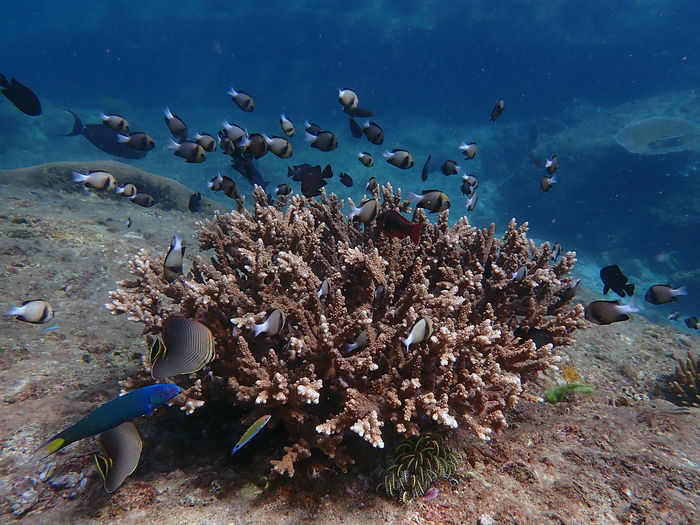 Flock of birds swimming in sea