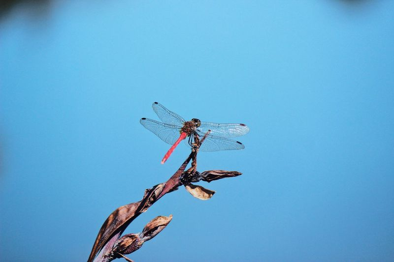 Dragonfly on board. Lake Naturelovers Dragonfly Water Pond Reflection Sky Blue Nature Copy Space No People Low Angle View Clear Sky Animal Animals In The Wild Day Animal Themes Animal Wildlife Plant Tree Flying Outdoors Insect Invertebrate Sunny Branch