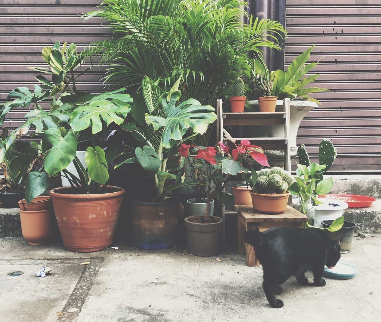 potted plant, plant, growth, domestic, pets, mammal, domestic animals, animal themes, one animal, animal, green color, no people, nature, front or back yard, domestic cat, day, plant part, cat, leaf, vertebrate, outdoors, houseplant, flower pot, gardening