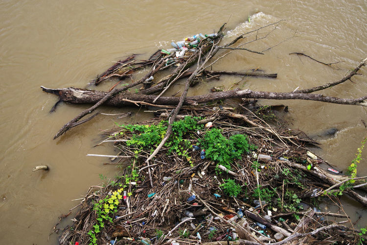 Garbage Dump Polluted Water Consumerism Day Garbage Garbage Bin Green Color Growth High Angle View Land Nature Negligence No People Outdoors Pet Pollution Plant Pollution Pollution Of The Environment River Root Tree Water Waterfront Wood - Material