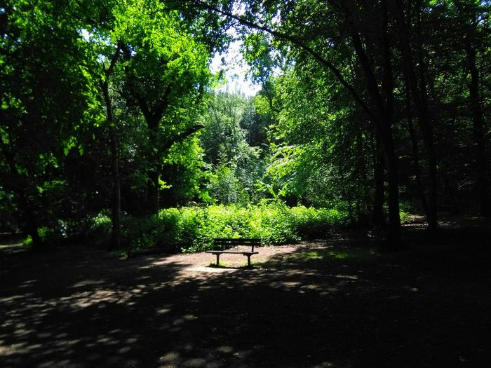 A wander through the woods of my childhood brought me to this sunny seat. Woods WoodLand Light And Shadow Seat In Park Sunny Spot Springtime English Countryside Bexley Woods Bexley Greenery Kent England Childhood Home Green Wood Original Experiences