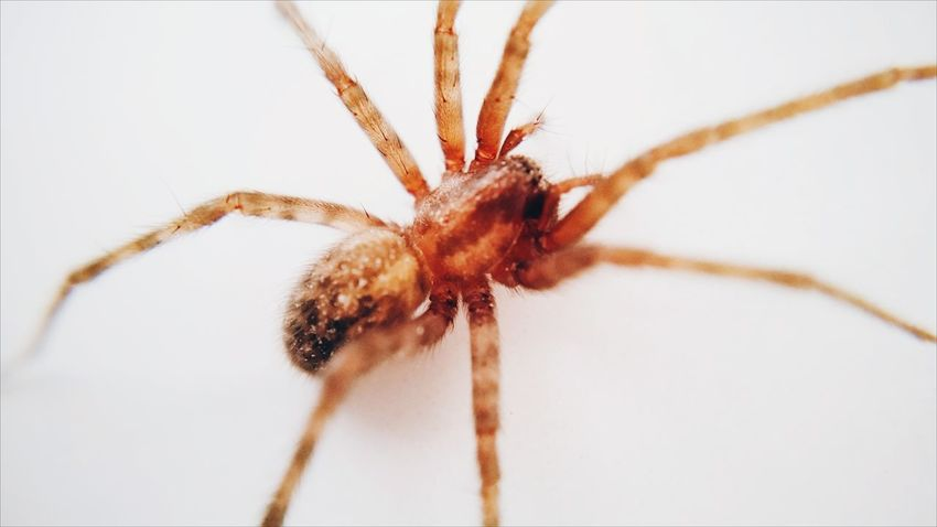 Upclose  Nature Camkixmacro Mobile Photography Camkix Arachnid House Spider Spider