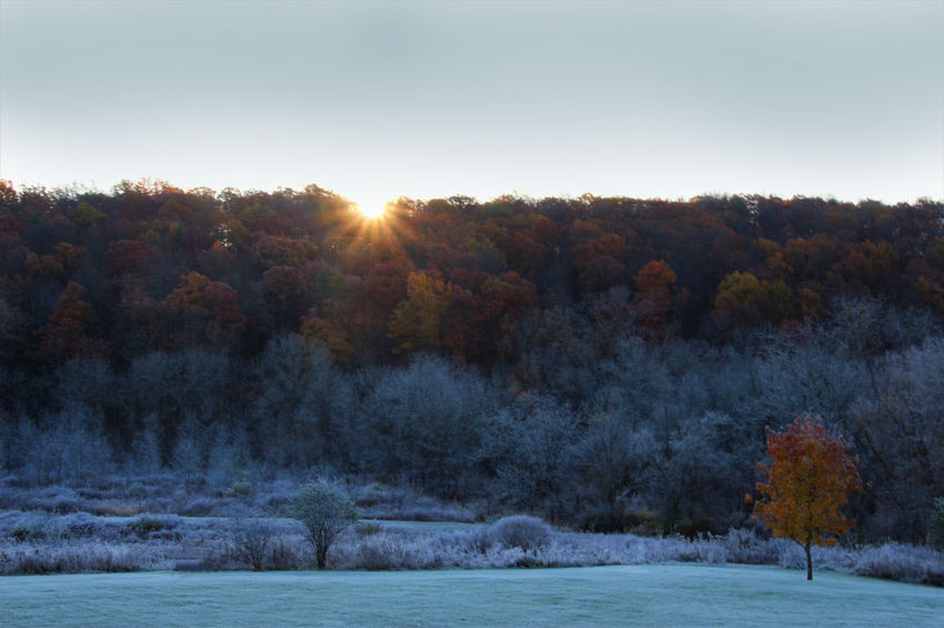 first frost found this field frosted while the higher trees and one lone tree below showing off their autumn colors Autumn Colors First Frost Tree Autumn Beauty In Nature Change Cold Temperature Landscape Nature No People Outdoors Scenics Sky Sun Sunlight Sunrise Tranquil Scene Tranquility