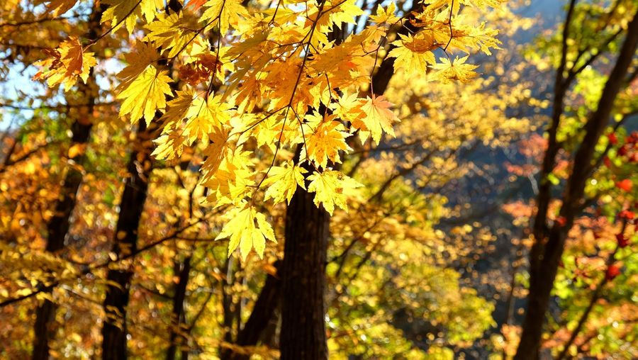Close-up of yellow tree during autumn