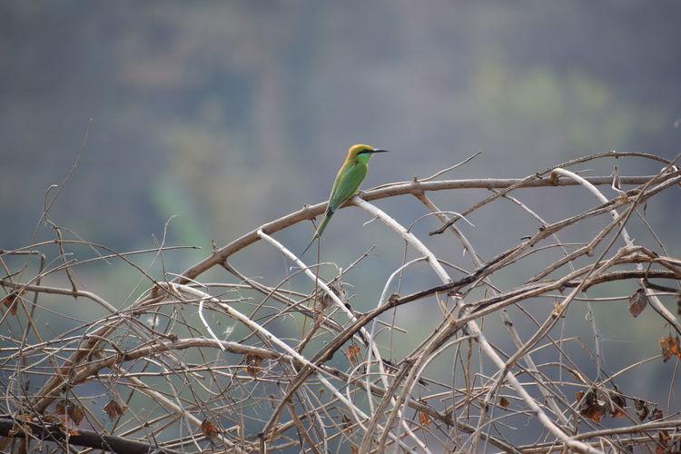 Birds Fliying Birds Freedom Nature Alone