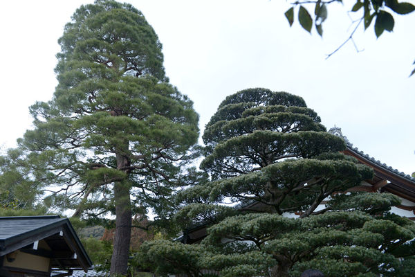 Architecture Beauty In Nature Building Exterior Built Structure Car Day Green Color Growth House Land Vehicle Low Angle View Mode Of Transportation Motor Vehicle Nature No People Outdoors Plant Sky Tree
