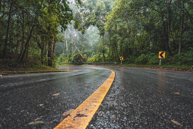 Surface level of road amidst trees during rainy season