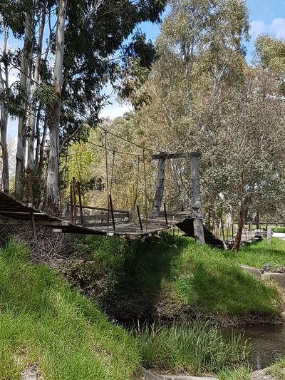 Outdoors No People Charleston South Australia Historic Swinging Bridge
