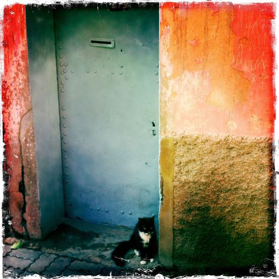 Pet Portraits Moroccan Cat By Badr Animal Themes Domestic Cat By Badr Eddine Rafiq Min Badr Marrakech Morocco Streetphotography