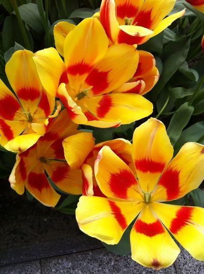 Flores Rojo Amarillo Jardin