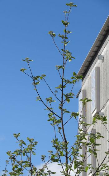 Tree Clear Sky Branch Blue Leaf Sky Architecture Building Exterior Close-up Petal Growing Springtime Decadence