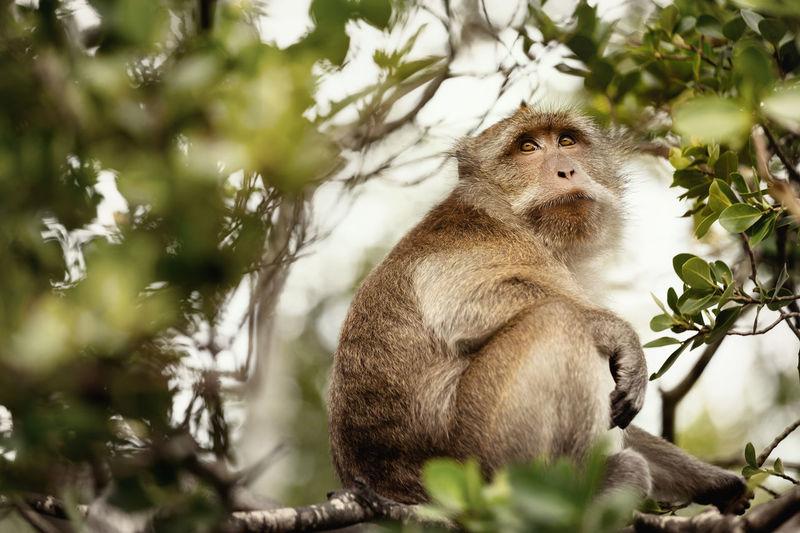 Lion sitting on tree