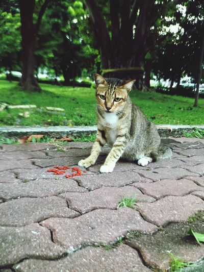 Cat Catlovers Lumpini Park Bangkok Thailand Animals