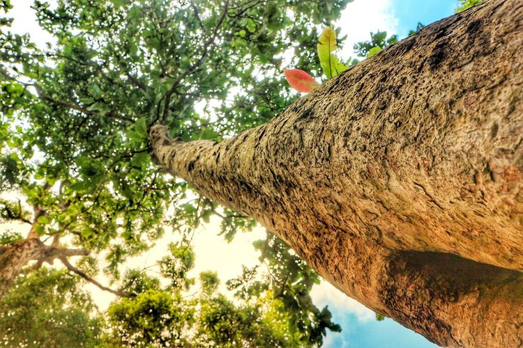 Tree Low Angle View Tree Trunk Day Sky Outdoors Nature Branch Growth No People Palm Tree Animal Themes Animals In The Wild Beauty In Nature Close-up