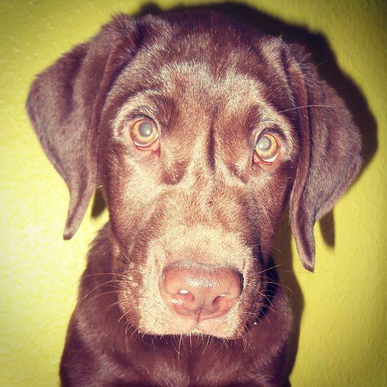 ilovemydog Ilovemydog Malove <3 MYheart Mydog