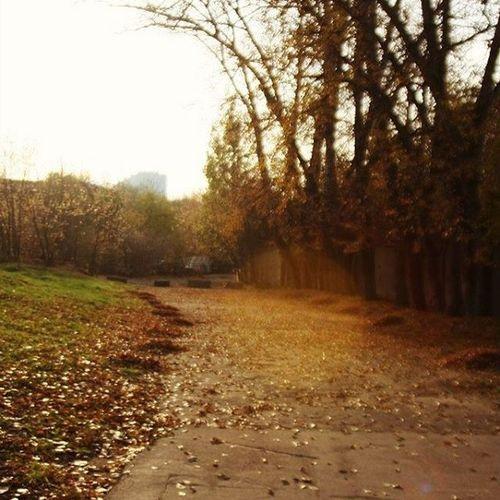 безфильтров невфокусе Природа красиво Москва ВАО Лосиноостровская РГСУ Moscow Nature Beautiful Cool