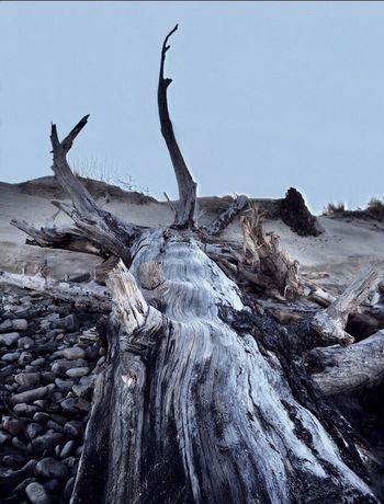 Scenic Textures And Surfaces Oregon Abstract Nature Tree Sculpure Silhouette TreePorn Landscape_photography Landscape #Nature #photography Landscapes Driftwood Fallen Tree Beach Photography Beach Landscape Cape Lookout, Oregon The KIOMI Collection