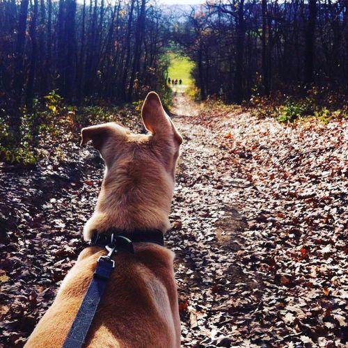 I Love My Dog Dog Love Dog Walking