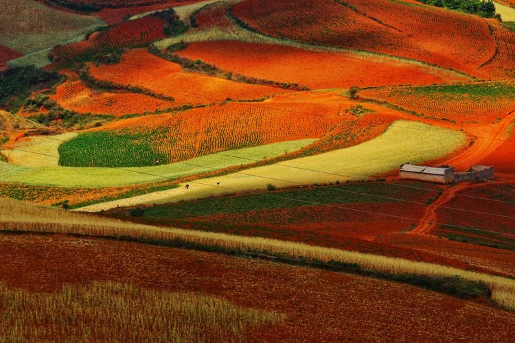 Yunnan Cereal Plant Rural Scene Agriculture Multi Colored Terraced Field Field Crop  Rice Paddy Pattern Landscape Plowed Field Cultivated Cultivated Land Plantation Farm Patchwork Landscape Agricultural Field Farmland
