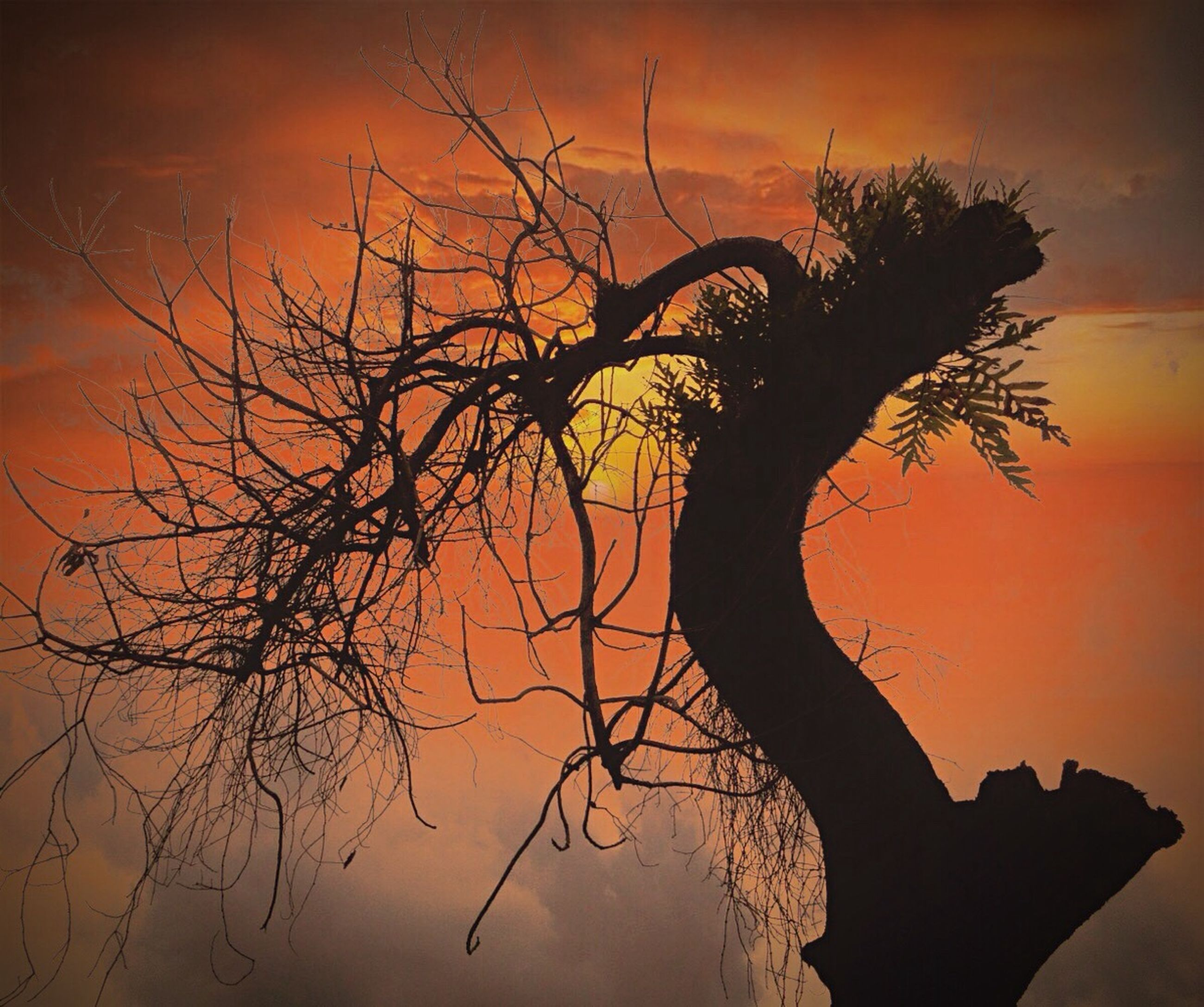 sunset, silhouette, tree, branch, nature, beauty in nature, sky, no people, backgrounds, outdoors, close-up