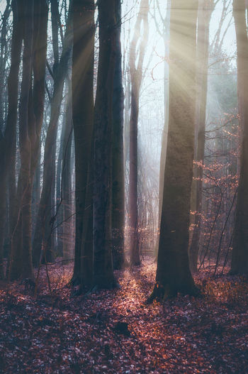Sunrise in the German Woodlands, March 2k18 EyeEmNewHere Nature Photography Beauty In Nature Day Environment First Eyeem Photo Fog Forest Growth Land Nature Nature_collection No People Non-urban Scene Outdoors Plant Scenics - Nature Streaming Sunlight Tranquil Scene Tranquility Tree Tree Trunk Trunk WoodLand