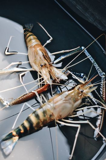 Shrimps River Animal Animal Themes Seafood Close-up Animal Wildlife No People One Animal Fish Indoors  Food