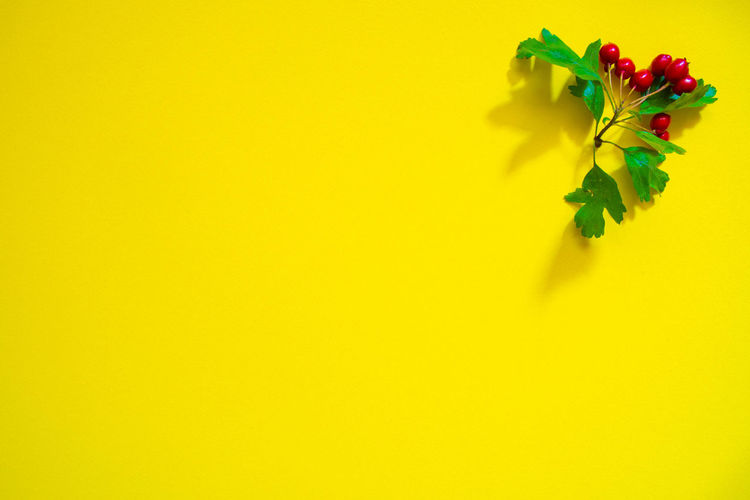 High angle view of multi colored plant against yellow background
