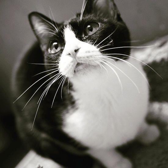 Cats Lovepet Petpet Cat Lovers Catsofinstagram Cat♡ Pet Petlover Petal Petstagram Pets Corner Pets HongKong Cat Hk