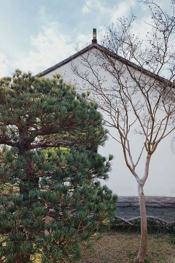 PhonePhotography Suzhou Zhuozheng Garden Classicarchitecture Plant Tree Sky No People Growth Nature Built Structure
