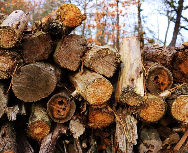 """Timber"" Timber Firewood Stack Woodpile Deforestation Lumber Industry Wood - Material Heap Textured  Forestry Industry No People Fossil Fuel Close-up Nature Forest Environmental Issues Backgrounds Outdoors Tree"