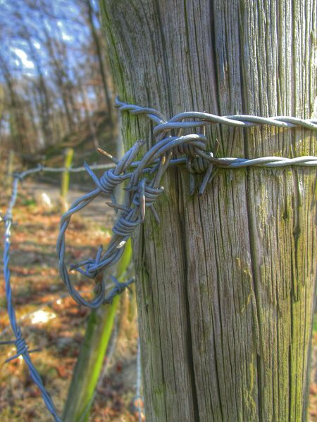 Barbed Wire Nature_collection Hdr_oftheworld Lovelynatureshots Telephoto Closeup MyHdrWorld