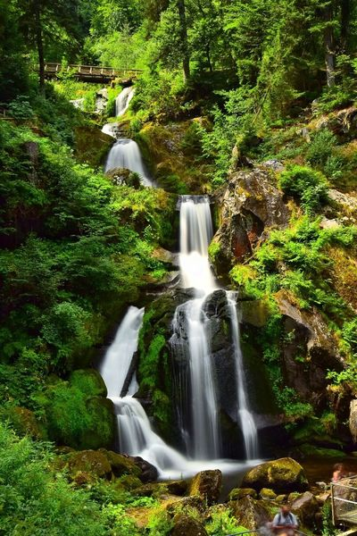 Waterfall Beauty In Nature Nature Long Exposure Outdoors Tree Water Forest River NIKON D5300 Nikonphotography Blackforrest Wasser Wasserfall Langzeitbelichtung No People Freshness Nature_collection Nature Photography Nature_perfection Naturephotography Waterfall_collection Triberg Triberger Wasserfälle Waterfall-collection