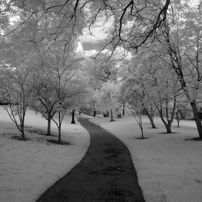 IMG_2429 by polishamericanphotographer on Flickr. Just follow this link to see and comment on this photo: https://flic.kr/p/sQVfSc Cleaveland CLE  Cleveland ClevelandOhio1796 Ohio UniversityCircle WadeLagoon CuyahogaCounty EastSide Water Beautifulohio Blackandwhite Blacknwhite Infrared CanonG11 InfraredCanonG11 Canon TeamCanon Digitalcamera Digitalphotography Digitalphoto PointNShot PointandShot Powershot ThisisCLE