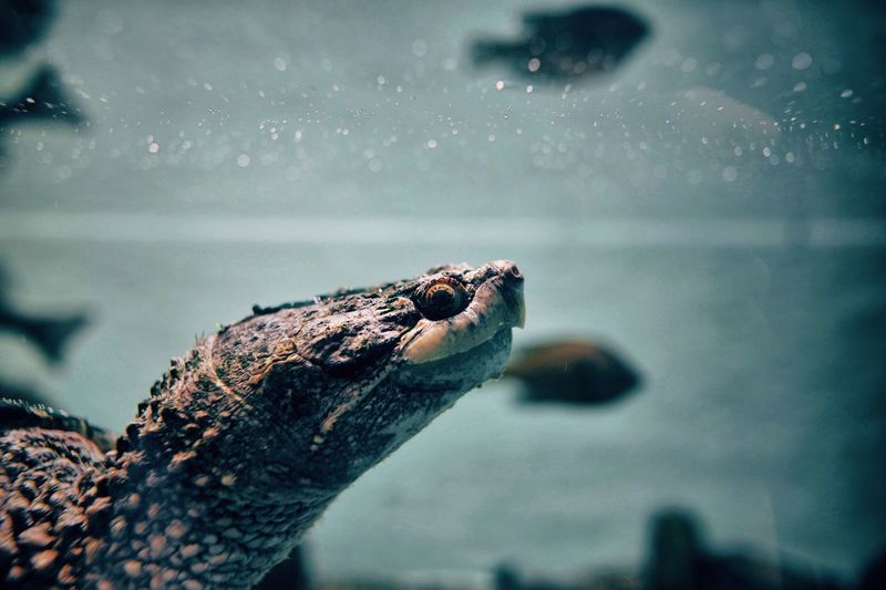 Close-up of tortoise swimming underwater