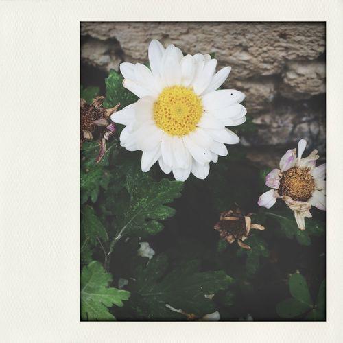 ???❤️❤️ Flower Popular Photos Moda First Eyeem Photo