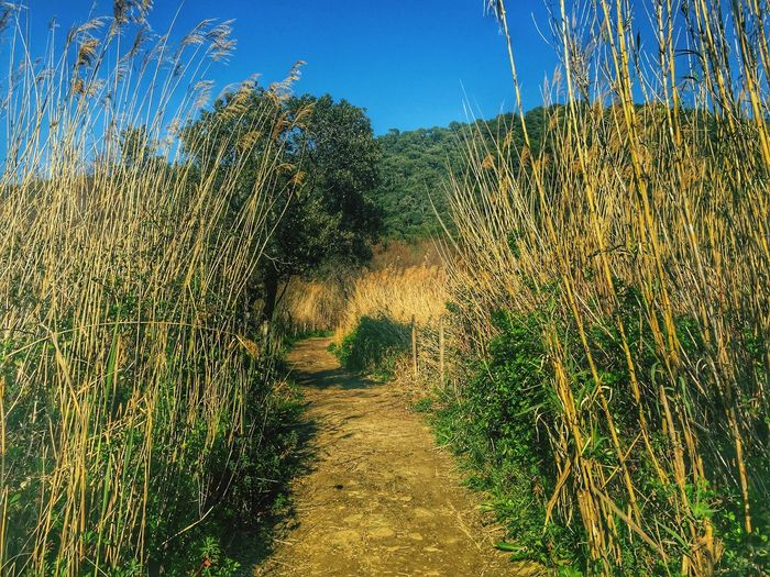 Wild nature Nature EyeEm Best Shots Check This Out Grass Green France Naturelovers Nature Beauty Path Way Relaxing