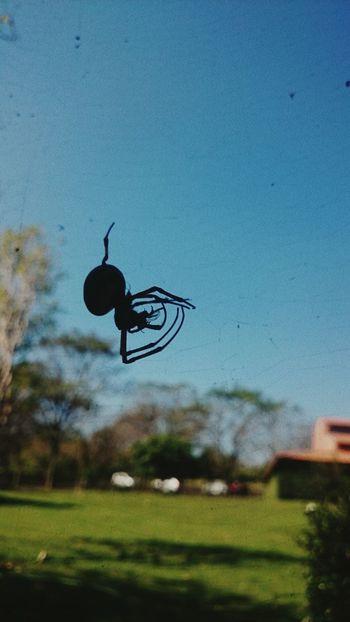 Spider Spider Web Creepy Window Nature Nature Life