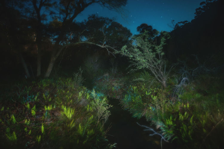 Moon Nights Blue Mountains Australian Bush Blue Mountains Blurred Brook Creekside Full Moon MoonNights Bushland Forest Growth Haunting  Landscape Light And Shadow Lightpaint Longtimeexposure Moon Light Moon Scape Mysterious Night Nightscape Nightsky Stars Tranquil Scene Tranquility Tree