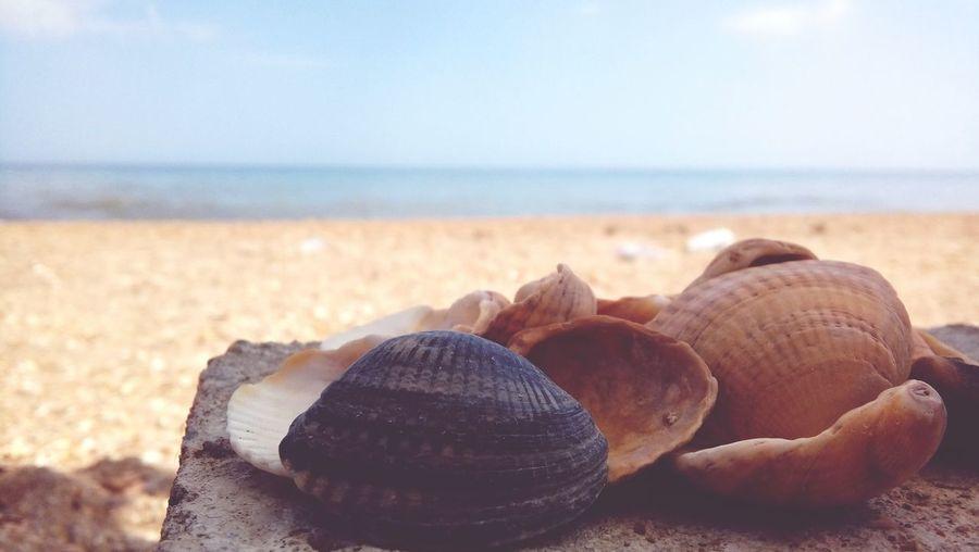 Close-up of seashells at beach against sky