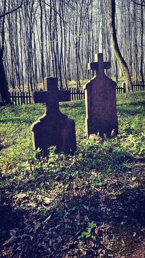 No People Shadow Outdoors Day Close-up Nature Hidden Cemetery Forgotten Place In The Forest Religion Tombstone Vértes Mountain