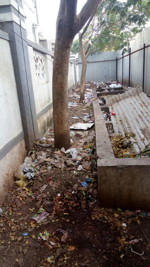 Tree Day Outdoors No People Negligence Vermicompost Palladium Exotica Madhav Nagar Dhanori Pune Maharashtra India